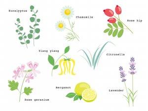 敏感肌 化粧品選び 無添加化粧品 自然派化粧品 オーガニック化粧品 植物エキス